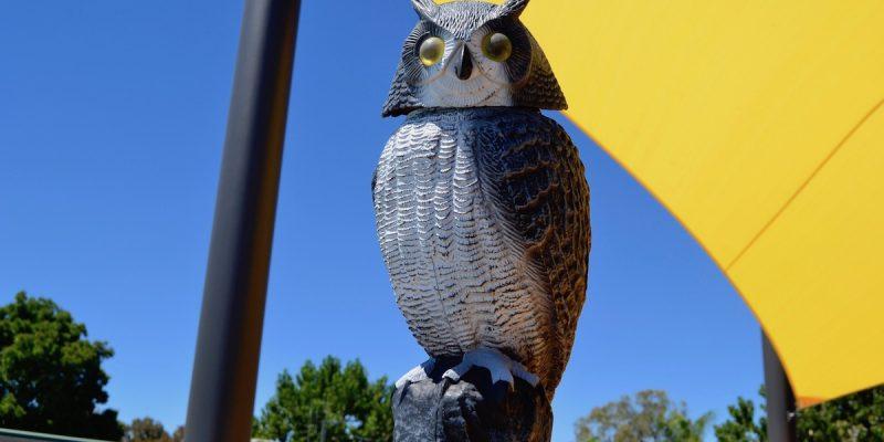 _DSC0465 owl